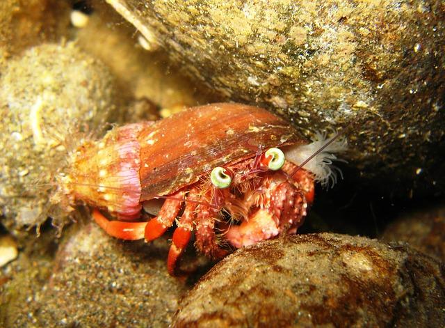 Crab in Puerto Galera